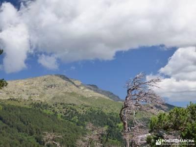 Tejos Rascafría-Valhondillo o Barondillo;reserva natural de muniellos ruta ponton de la oliva las c